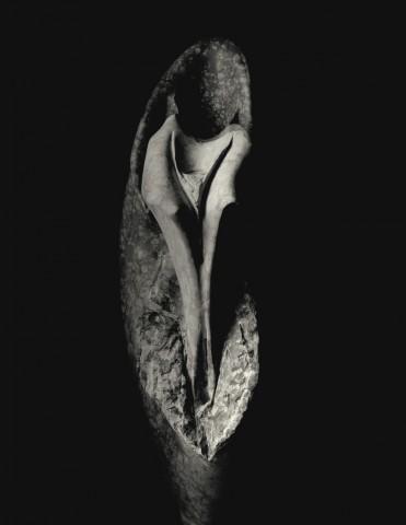 anatomia vegetale